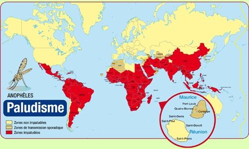 Paludisme; infections a plasmodium; malaria