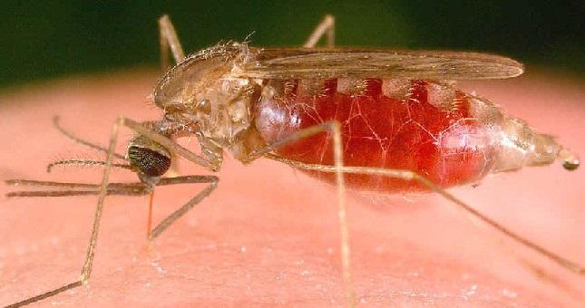 Cambodge : Un plan quinquennal de lutte contre le paludisme